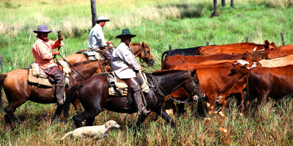 Die Reiter treiben die Rinder zur Marcación. © Horst Martens