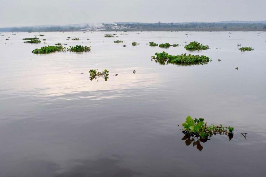 Immer wieder treiben Camalotes vorbei, kleine Inseln aus glänzenden großblättrigen Wasserpflanzen mit lilafarbenen Blüten.